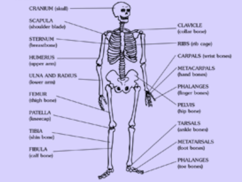 Skeleton Printable | Worksheets & Printables | Scholastic ...
