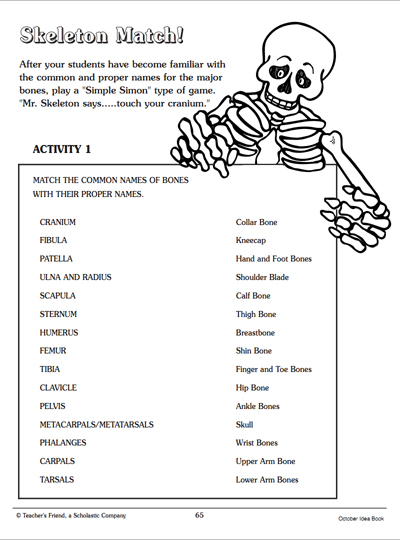 Skeleton Match Word Matching Page Worksheets