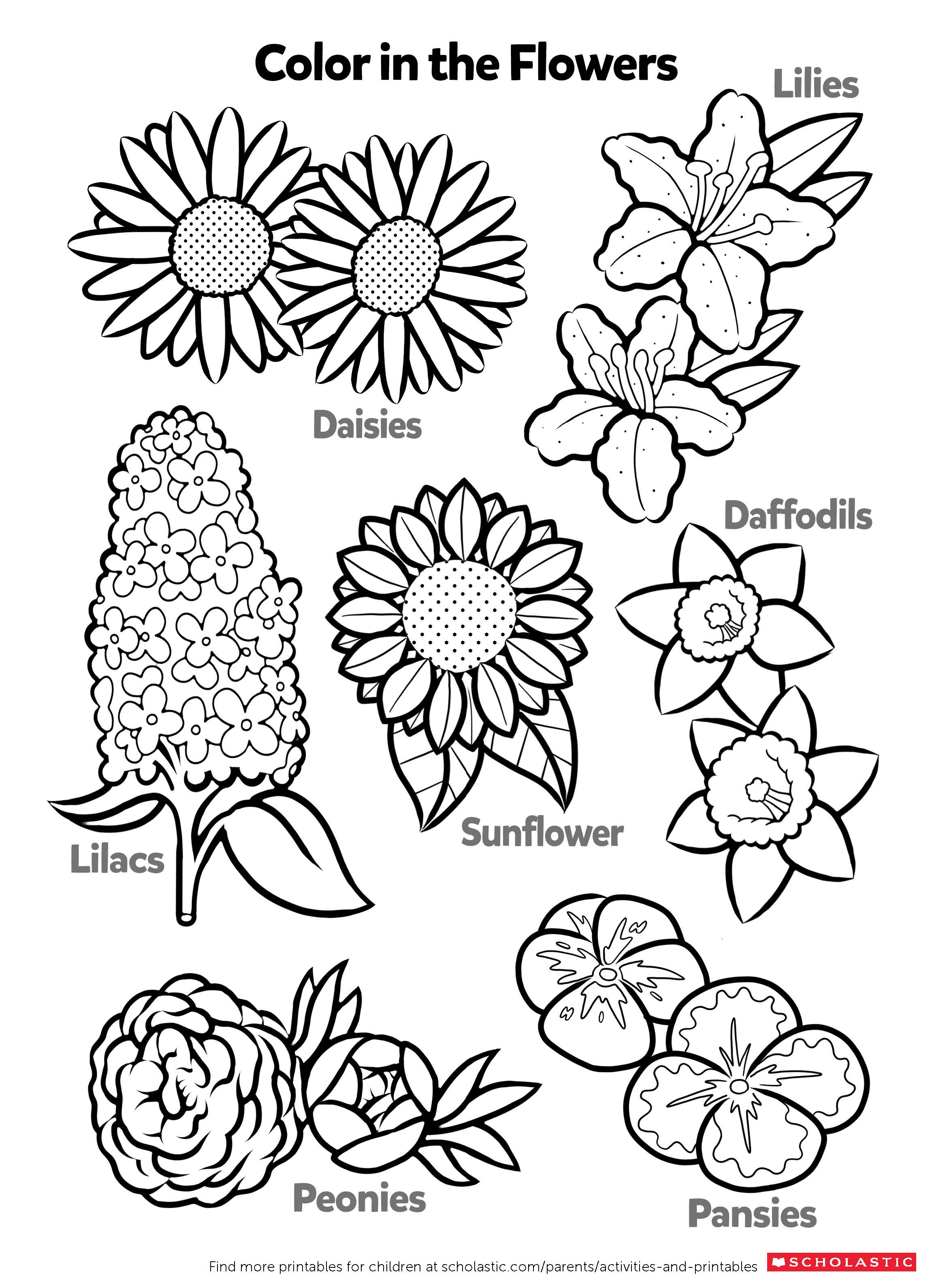 Learn About Flowers By Coloring   Worksheets & Printables ...