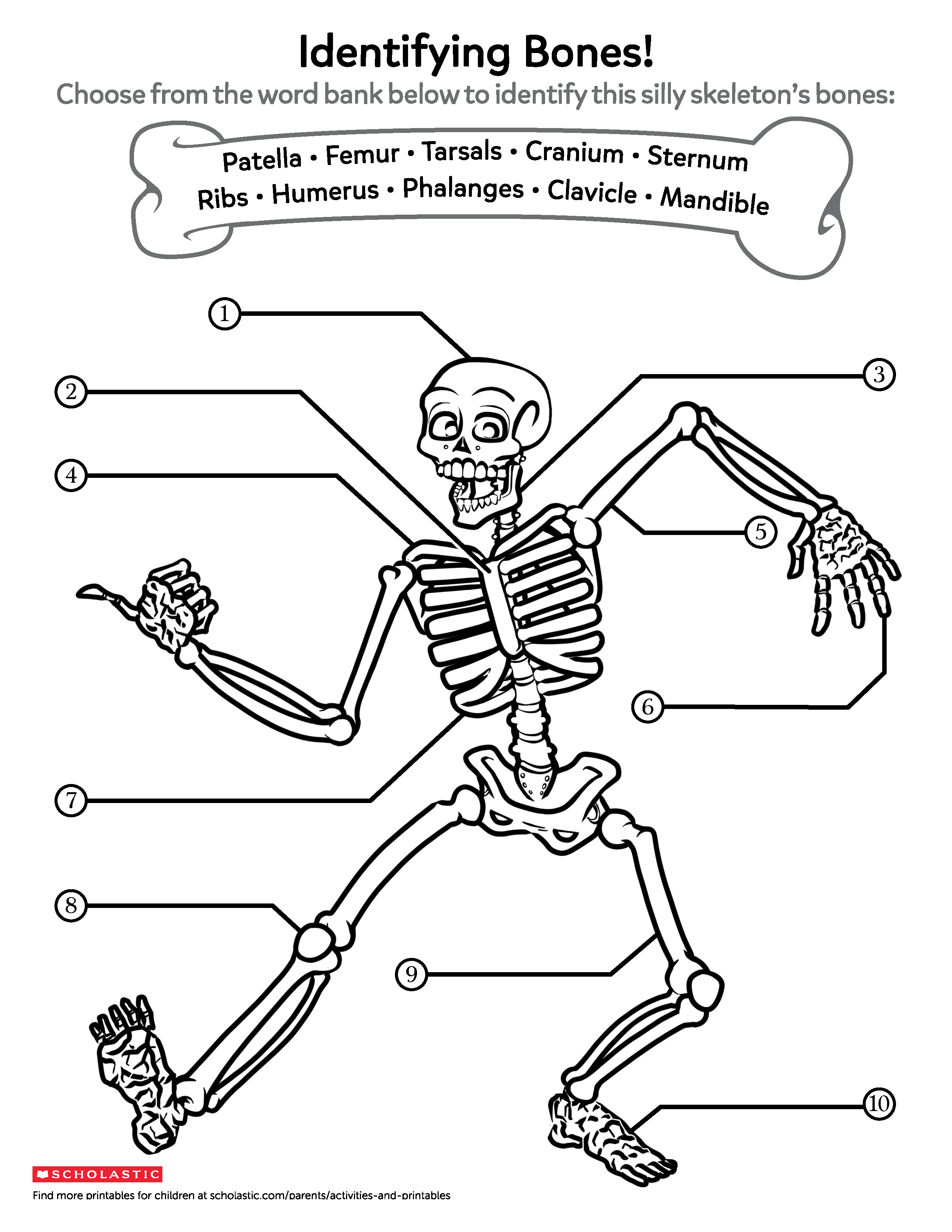 photo about Printable Skeleton Bones identified as Discovering In excess of Bones Worksheets Printables Scholastic