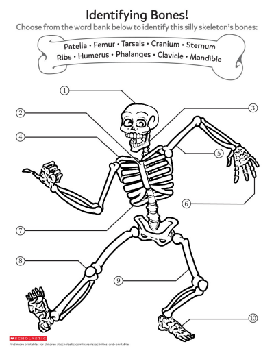 Learning About Bones Worksheets Printables Scholastic
