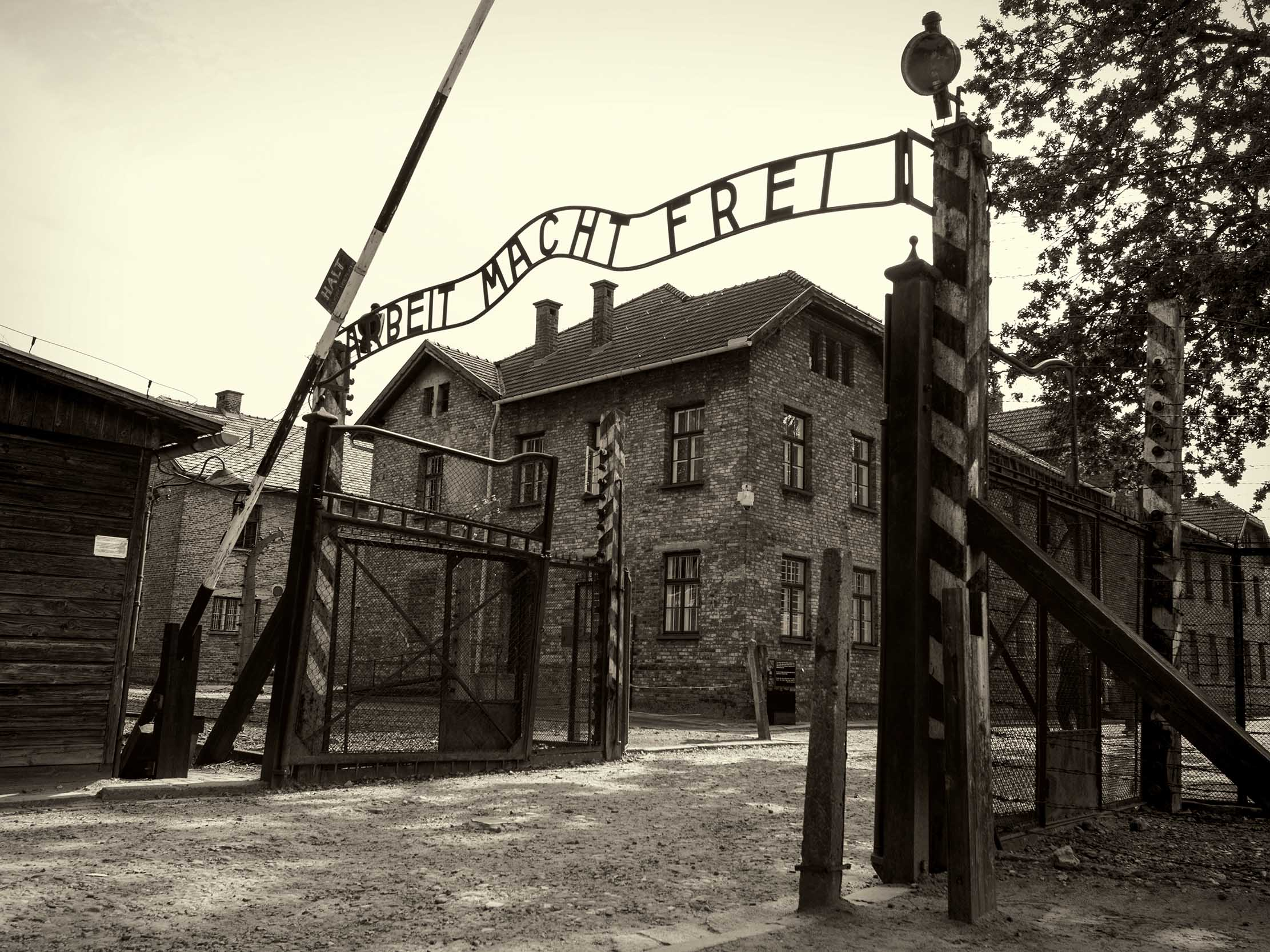 holocaust devil i n vienna essay (results page 2) view and download holocaust essays examples also discover topics, titles, outlines, thesis statements, and conclusions for your holocaust essay.