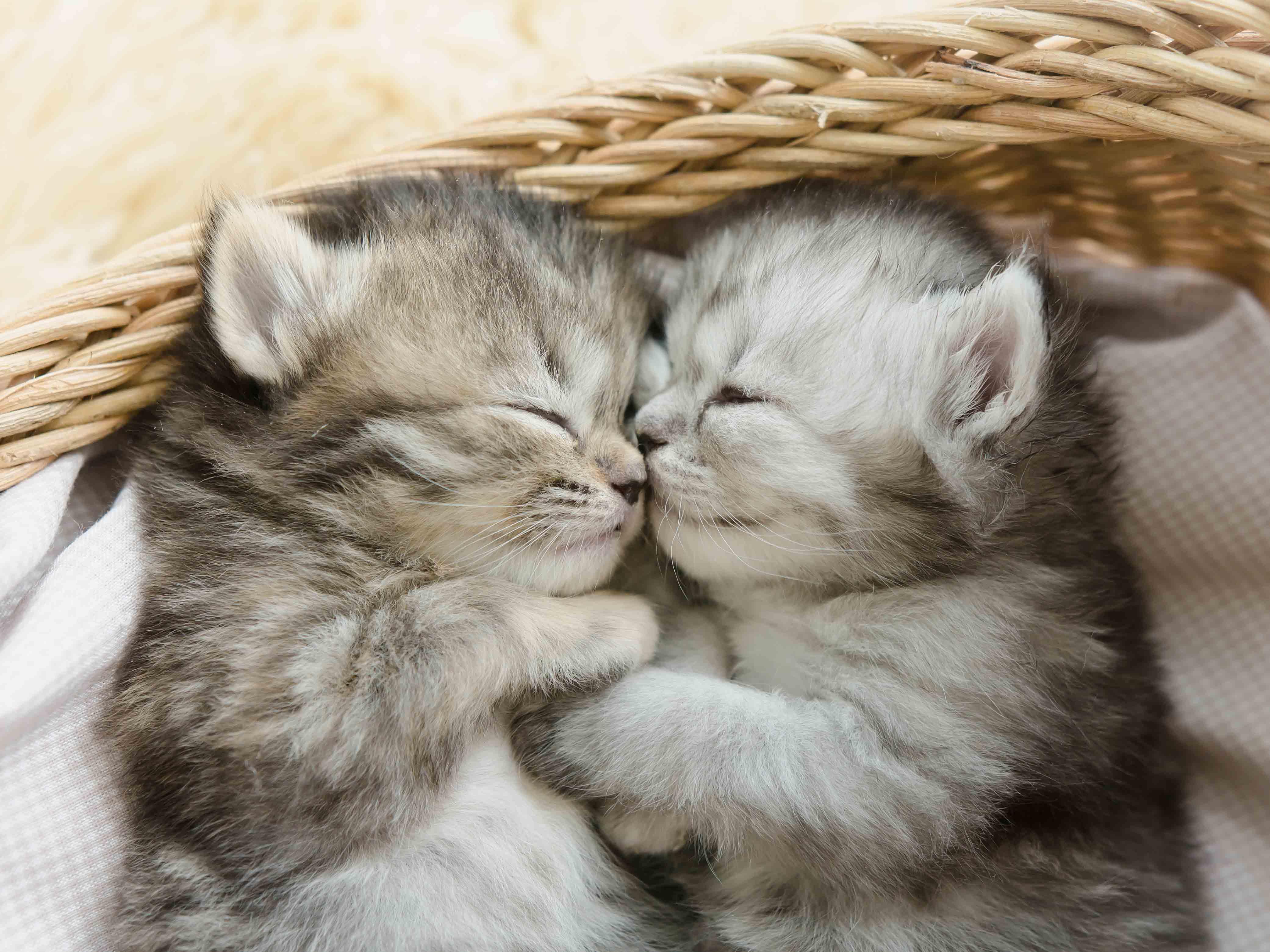 Kittens Book List | Scholastic