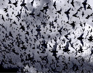 Soar With Bats: A Science Explorations Activity