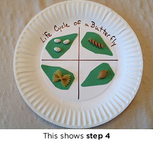Butterfly Life Cycle Plate Craft Scholastic