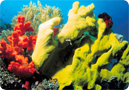 Kids' Environmental Report Card: Coral Reefs