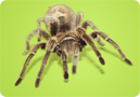 Kids' Environmental Report Card: Spiders