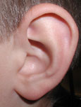 Closeup of an ear