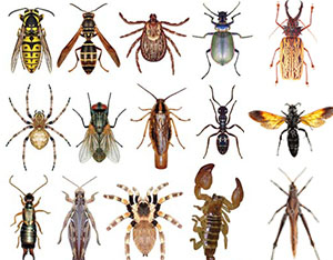 general facts about insects and bugs scholastic