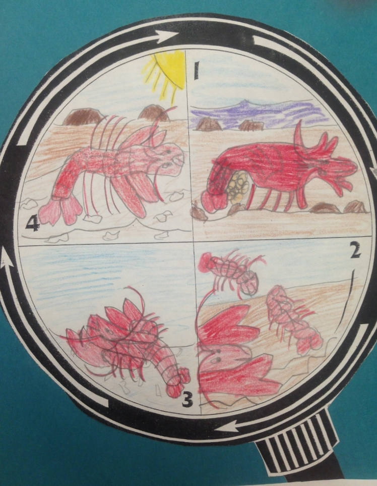 crayfish life cycle diagram