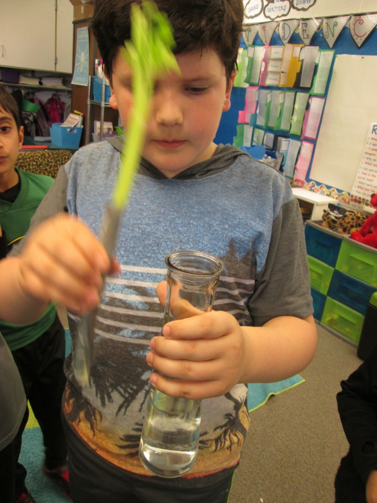 Celery Science: Kids Design Their Own Experiments
