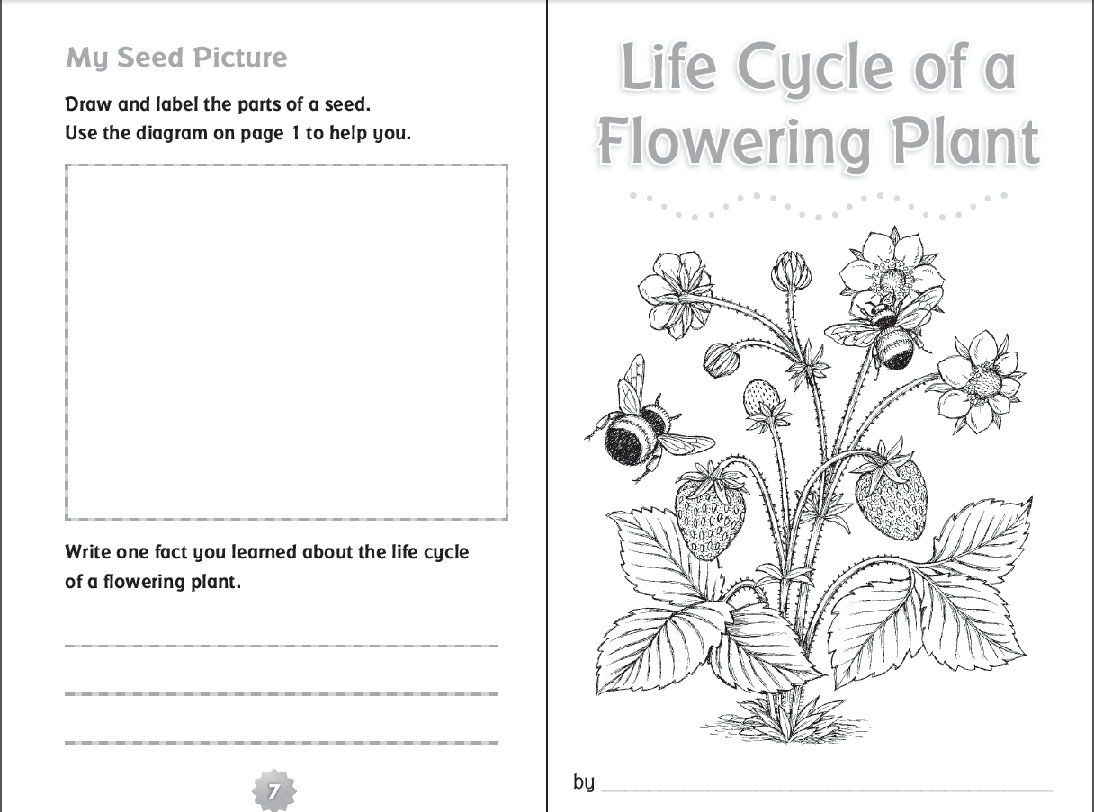Worksheets Plant Cycle Worksheet 10 ready to go resources for teaching life cycles scholastic cycle of a flowering plant printable booklet