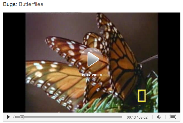butterfly essay for kids Access to over 100,000 complete essays and term papers adaptations play a big role in butterflies if the butterfly is darker then it will heat up faster.