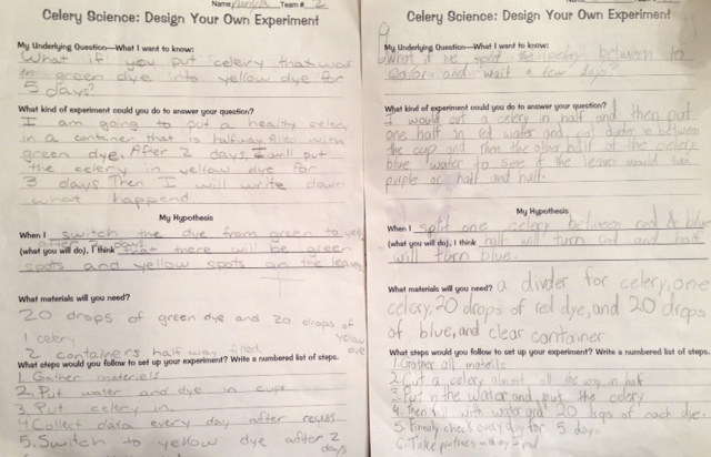 Celery Science Kids Design Their Own Experiments Scholastic