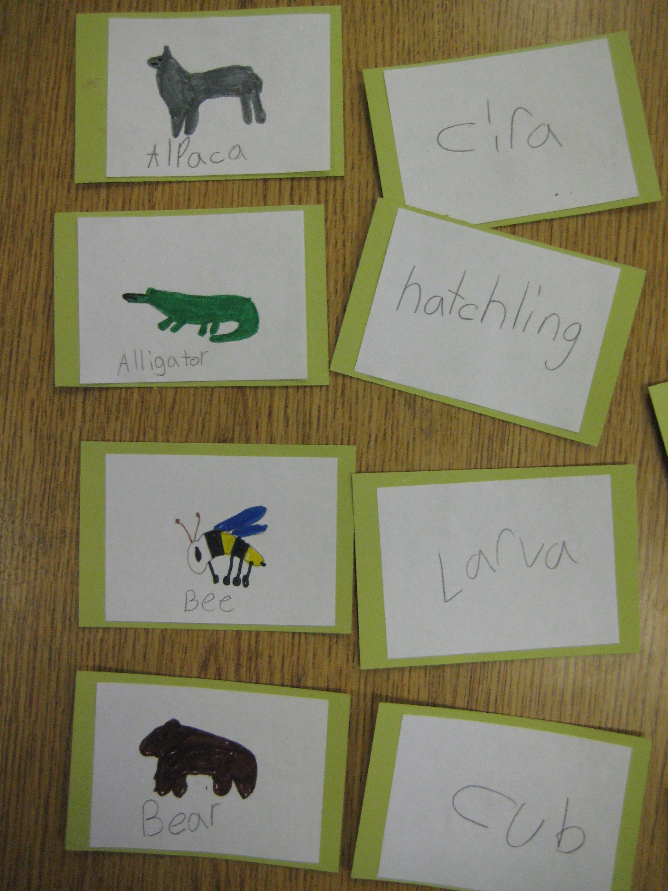Homework help food chains