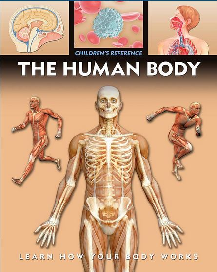 The Human Body Children's Reference