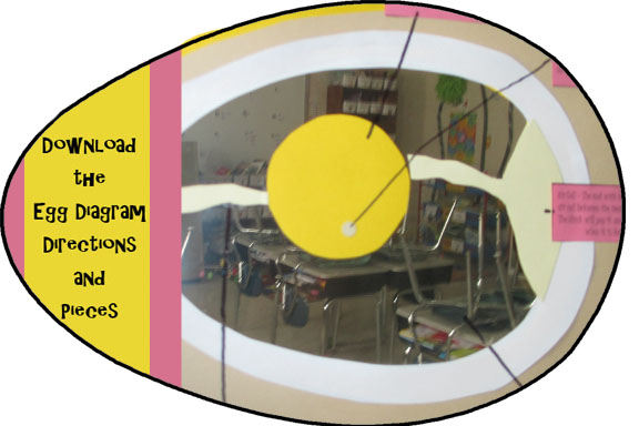 Egg diagram directions