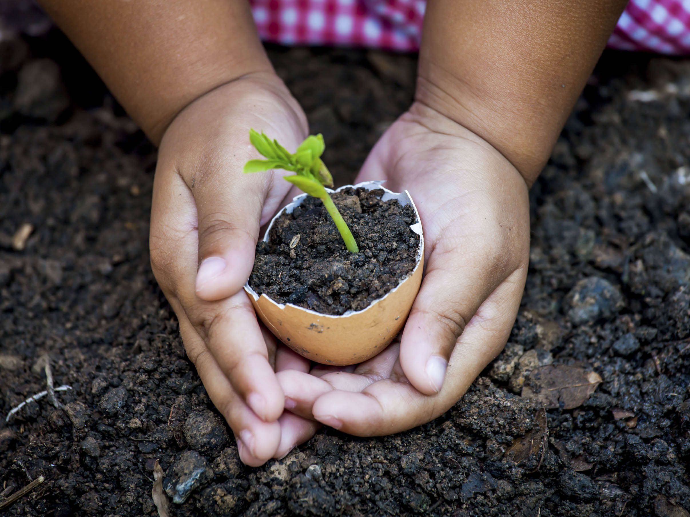 From Seed to Plant | Scholastic