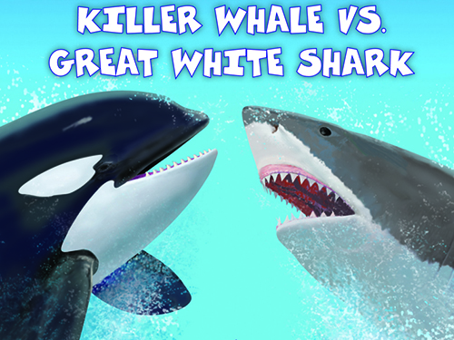 Killer Whale Vs Great White Shark Teaching Guide Scholastic