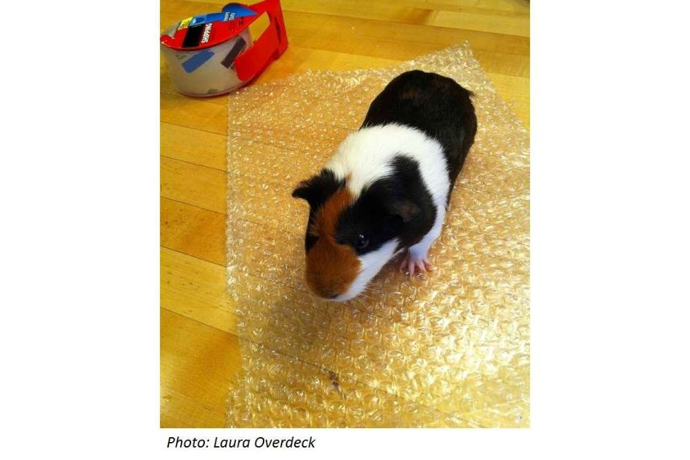 Today From Bedtime Math: Bubble Wrap Appreciation Day